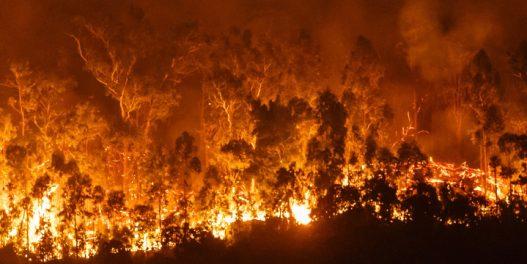 Amazoniji i ove godine preti opasna sezona požara