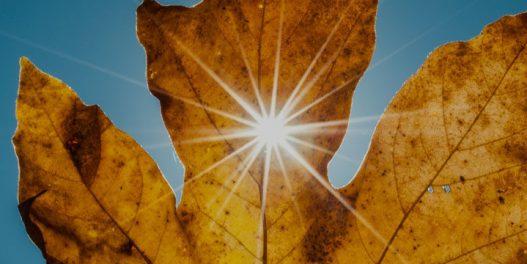 Oktobar 2019. je na putu da bude najtopliji od kako vršimo merenja