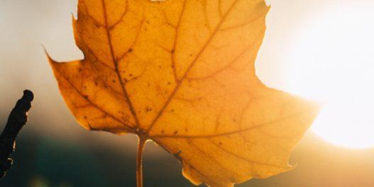 Za nama je najtoplija jesen u Srbiji od kako se vrše merenja
