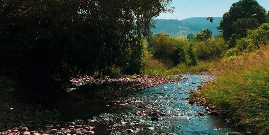 Kakva je budućnost domaćih reka zbog klimatskih promena?