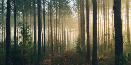 Kako će klimatske promene uticati na šumske ekosisteme?