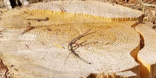 Globalna deforestacija skočila za 77 odsto tokom pandemije