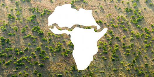Da li Veliki zeleni zid može da zaustavi širenje pustinje?