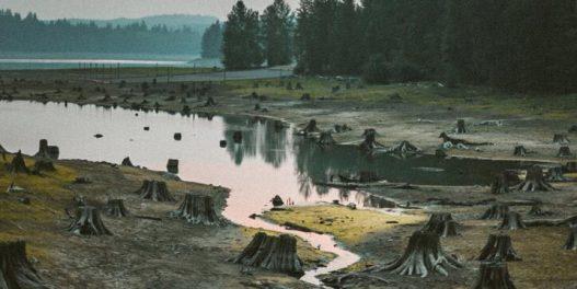 Kako deforestacija doprinosi klimatskim promenama?