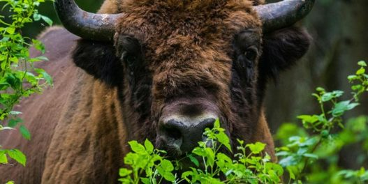 IUCN Crvena lista: 35.765 biljnih i životinjskih vrsta je u opasnosti od izumiranja