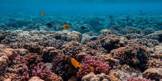 Kreira se prva mapa koja pokazuje svaki koralni greben na Karibima
