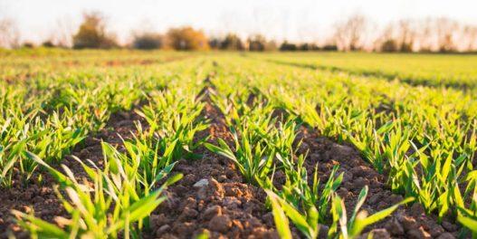 Naučnici razvijaju sezonsku prognozu vremena kako bi pomogli domaćoj poljoprivredi da se izbori sa klimatskim promenama