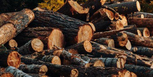 500 naučnika u otvorenom pismu traži od svetskih lidera da spreče uništavanje šuma radi dobijanja energije