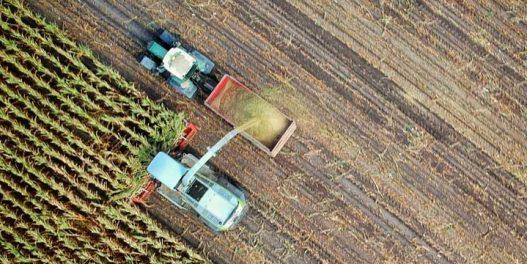 Britanski startap pretvara ugljen-dioksid u hranu za životinje
