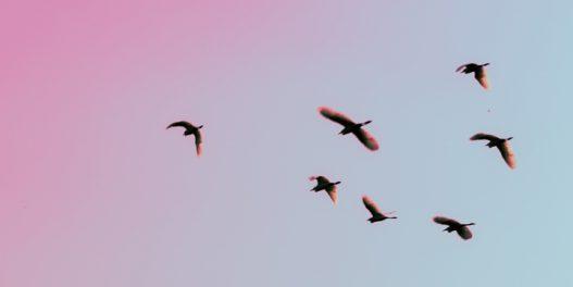 Filadelfija gasi svetla na soliterima kako bi omogućila pticama selicama bezbedniju migraciju