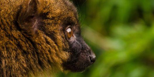Klimatske promene daleko više prete endemskim vrstama
