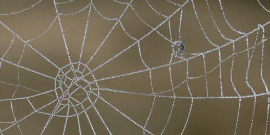 Paukova mreža inspirisala naučnike da naprave alternativu za mikroplastiku