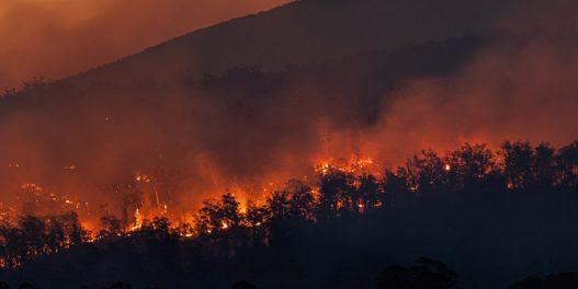 Amazonska prašuma je postala izvor emisija CO2, pokazuje novo istraživanje