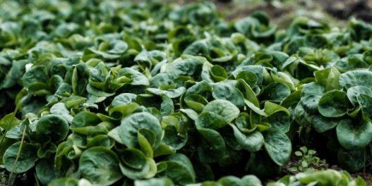 "Nova tehnologija sistema za navodnjavanje ""sluša"" potrebe biljaka"