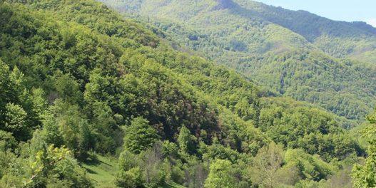 Da li će klimatske promene spaliti šume u Srbiji?